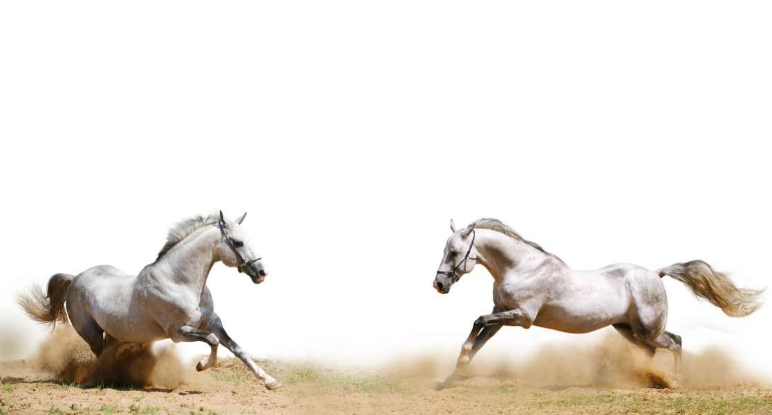 Hevosen Ylläpito